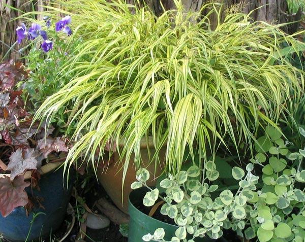 Succulents for Plants suitable for japanese garden