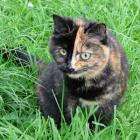 Cat In Grass Mugsy