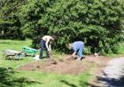 Digging Rhododendron Patch