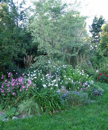 elm tree. elm tree picture variegated