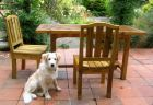 Patio Table Chair Puppy