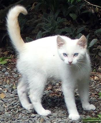 White Cat Orange Spots