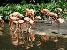 Flamingo Bird Park