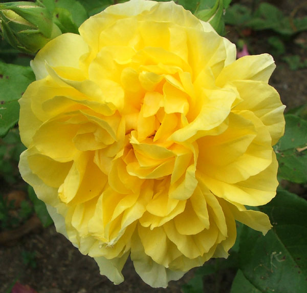 Garden Journal 08