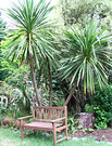 Bench Wooden Cordyline