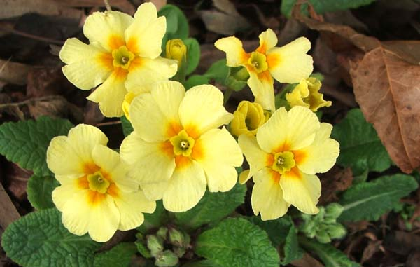 Names of yellow spring flowers names of yellow spring flowers pixshark images mightylinksfo Image collections