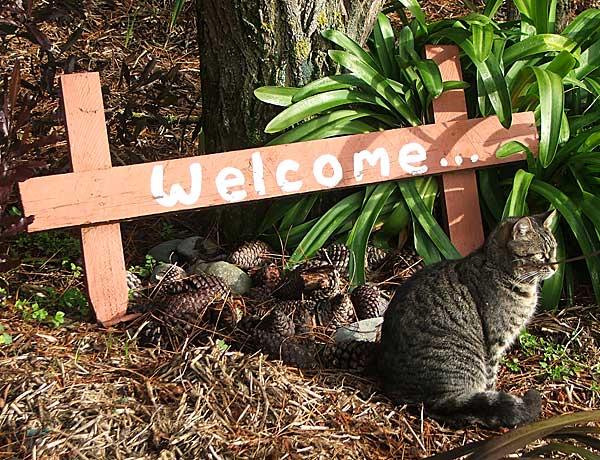 Cat Welcome Garden ...