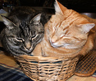 Basket Two Cats