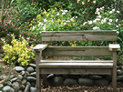 Bench Rustic Roses