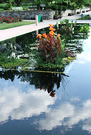 Canna Reflection Pool