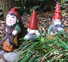 Agapanthus Gnomes Three