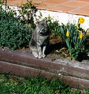 Cat Catmint Spring