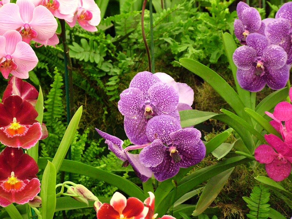 http://images.mooseyscountrygarden.com/hampton-court-flower-show/hampton-court-flower-show/display-orchids.jpg
