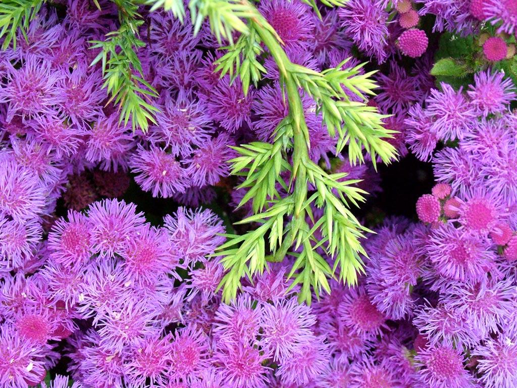 фиолетовый зеленый контраст