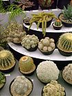 Cacti Display