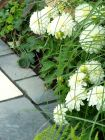 Dahlias Garden Paving