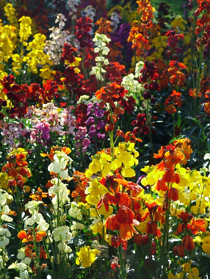 colourful-spring-flowers_197.jpg