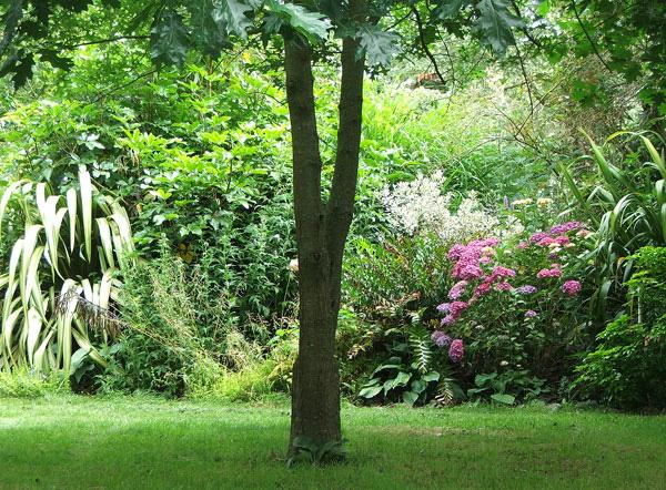 Apple tree garden for Garden trees photos