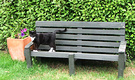 Bench Cat Olearia