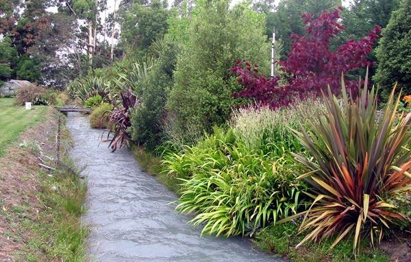 Dog garden path for Shrubs for garden borders