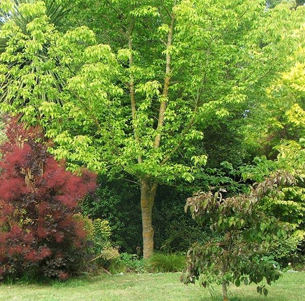 Dog garden path for Garden trees b q