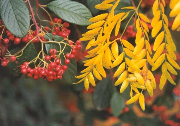 http://images.mooseyscountrygarden.com/mooseys-garden-tour/driveway-garden/autumn-garden-colors.jpg