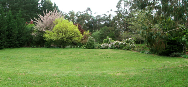 Frisbee lawn garden for Large grasses for gardens