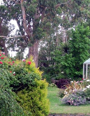 House and garden for Garden design under gum trees