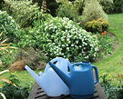 Blue Watering Cans