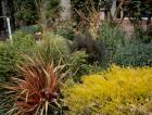 Mixed Plantings Fennel