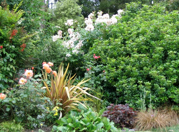 Island garden for Garden shrubs