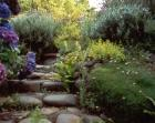 Garden Path Stone Ferns