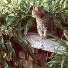 Garden Bench Sifter Cat