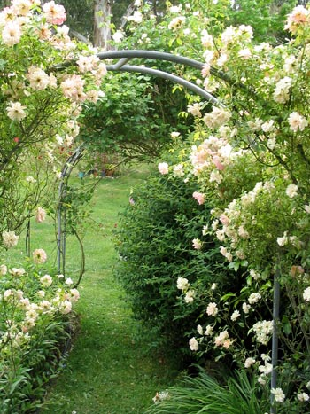 rose garden arch Gardens with arches  luxurious way to express yourself