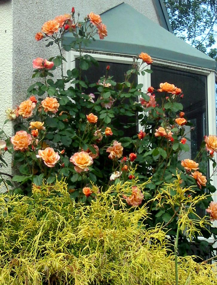 Image Result For Garden Window