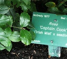 Captain Cook Label