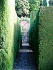 Box Hedge Path