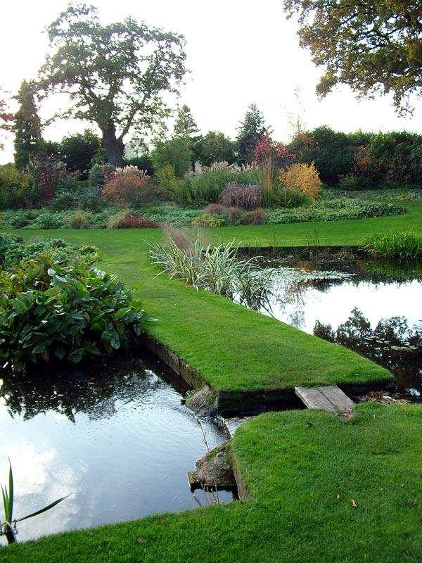 Water Garden Ferns