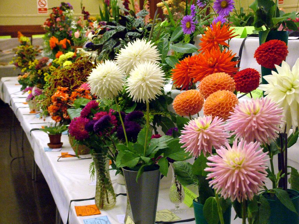 Bridgwater Flower Show