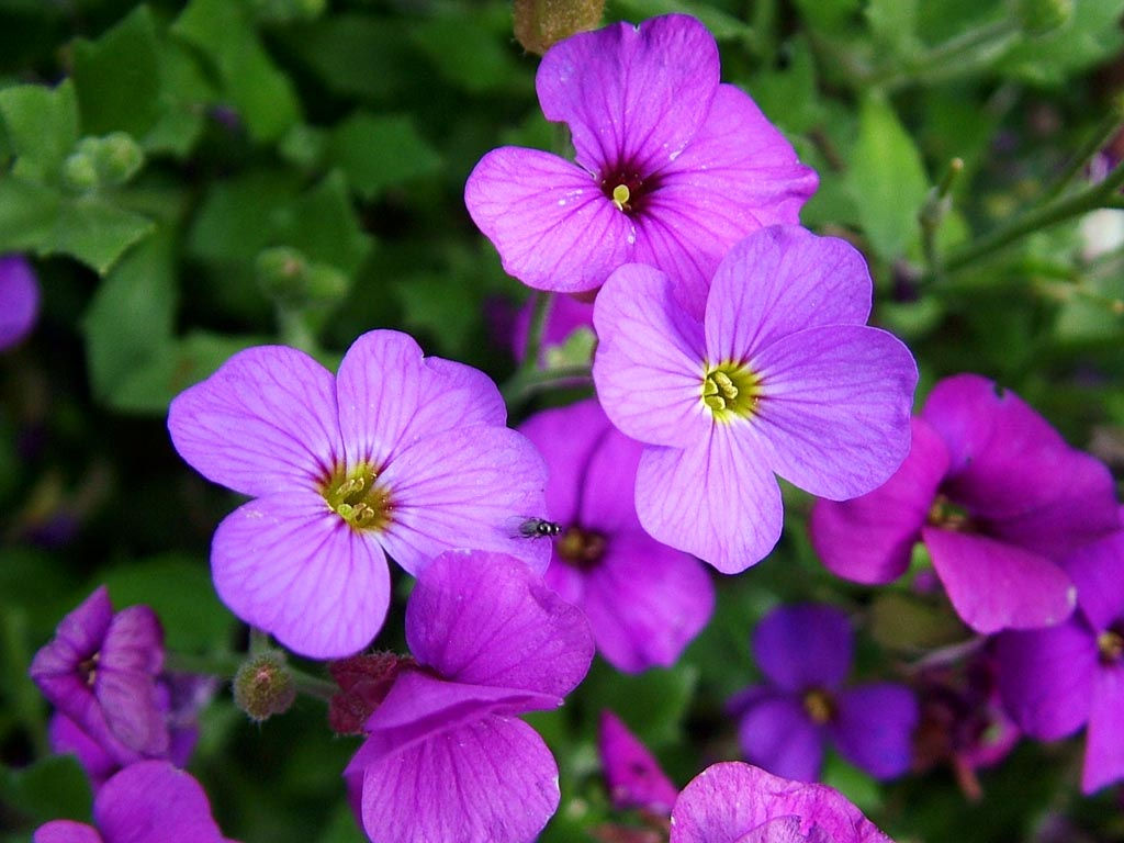 Purple Backyard Flowers : Purple Garden Flowers for Pinterest