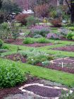Chelsea Physic Garden Beds