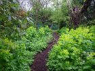 Lush Woodland Path Plantings