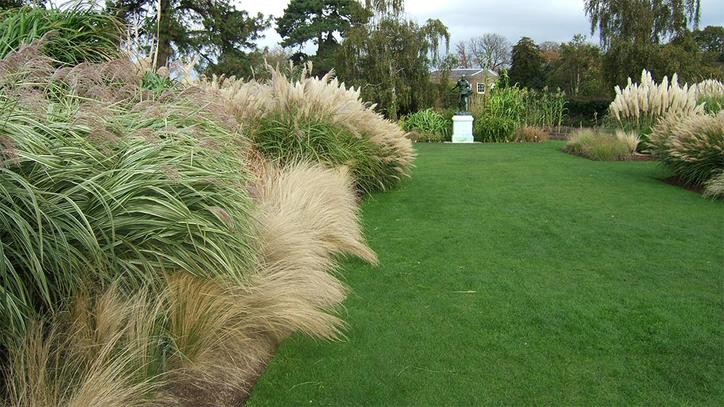 Kew gardens for Grasses for garden borders