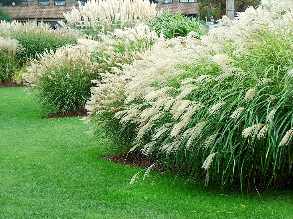 28 best grasses for garden gardening in africa for Planting plans with grasses