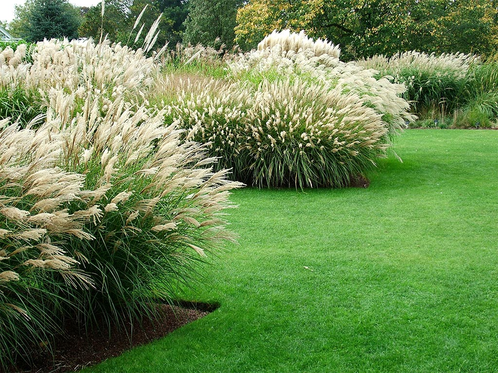 Kew gardens for Using grasses in garden design