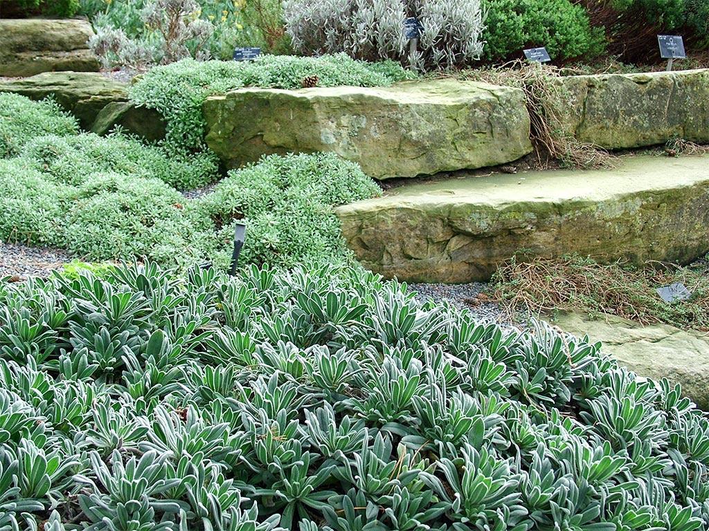 Rock Garden Ground Cover