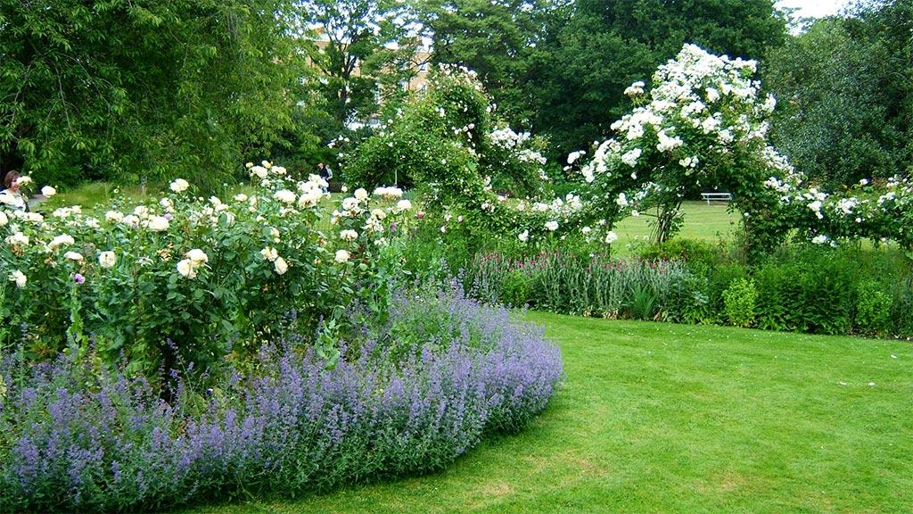 Rustic cottage style gardens on pinterest cottage for Flower garden borders
