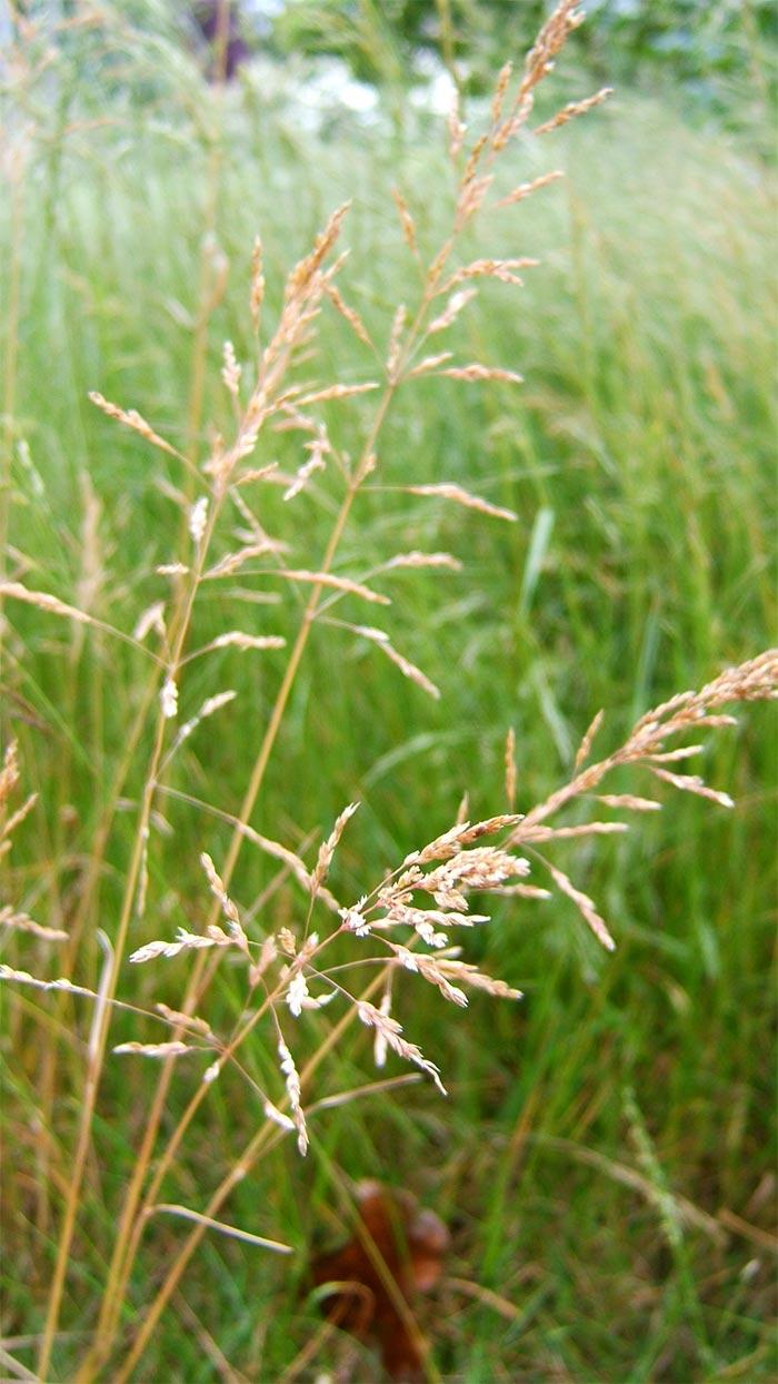 2005 for Wild grass gardens