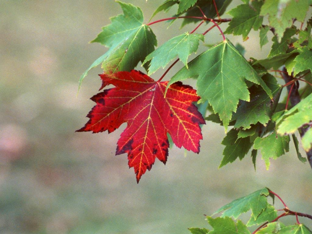 Leaves mooseyscountrygarden com images weather seasons autumn leaves
