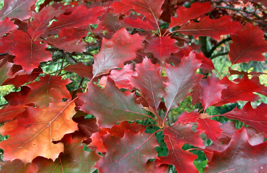 When leaves fall sustainability classroom resources at